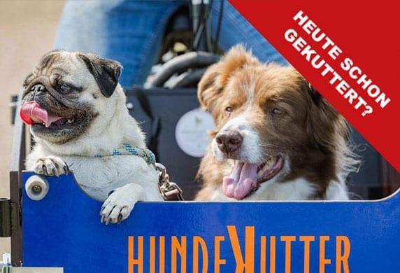 kutter1 - Ferien mit Hund