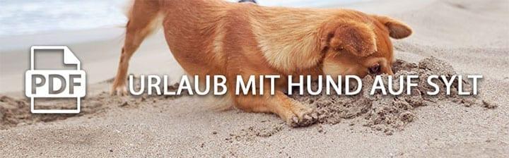 hund sylt - Ferien mit Hund